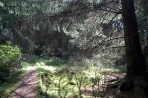 Puck's Glen Walking Trail